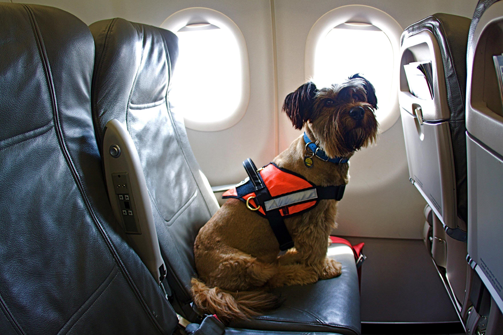 7 hãng bay nổi tiếng cho phép bạn du lịch muôn nơi cùng thú cưng