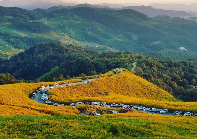 Đồi dã quỳ nở rực vùng núi Thái Lan