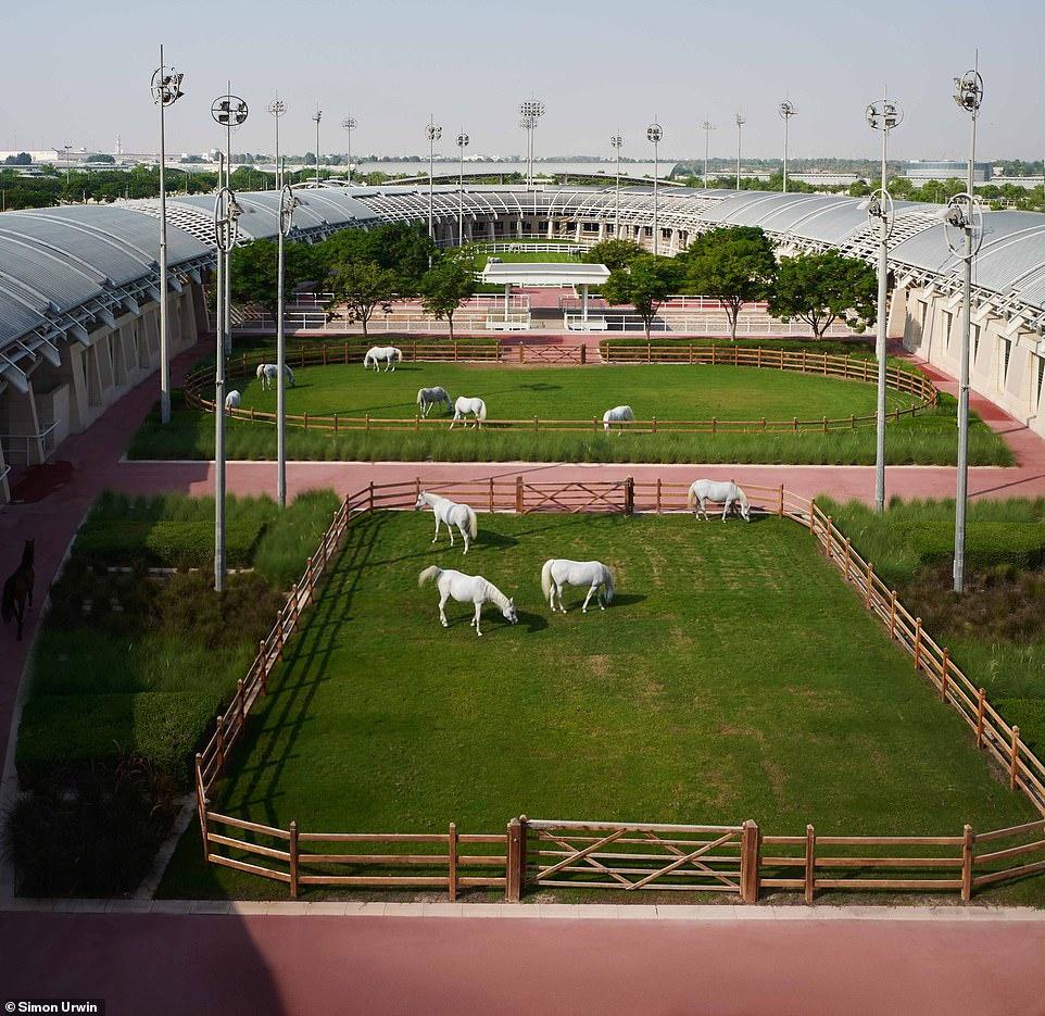 Khách sạn 5 sao dành cho ngựa duy nhất trên thế giới