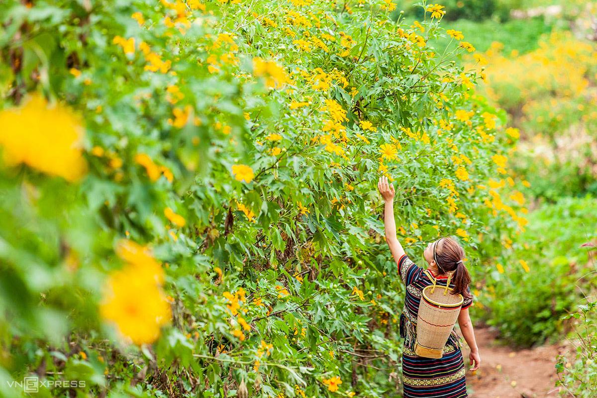 Check-in mùa hoa cỏ cuối năm dọc đất nước