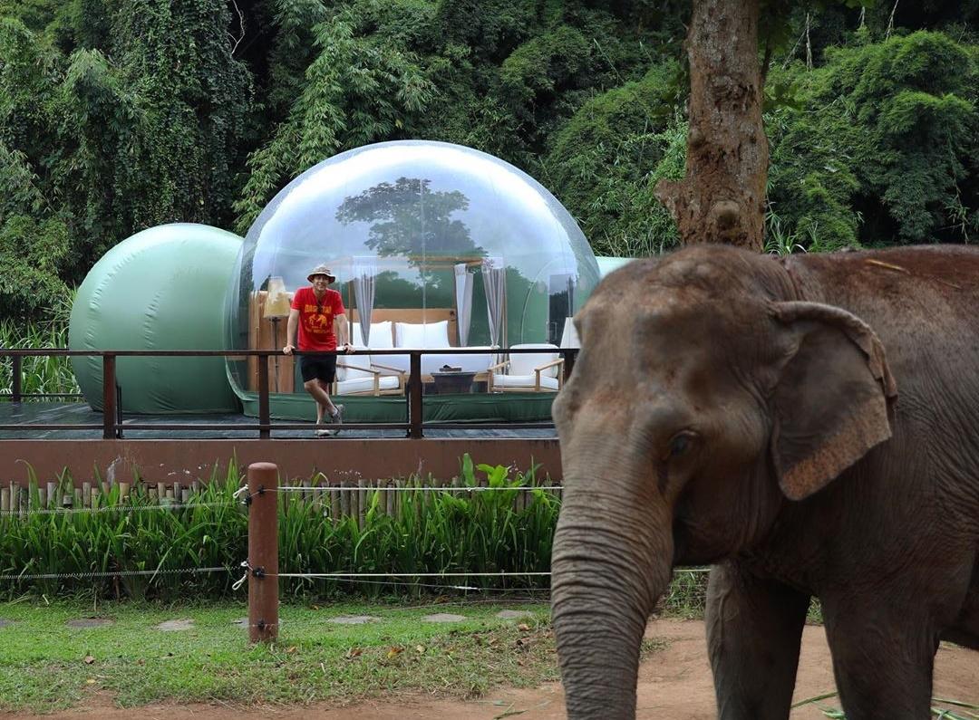 Resort ở Tam Giác Vàng nơi du khách ngủ cùng voi