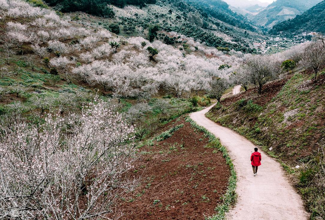 Sắc hoa xuân vùng cao