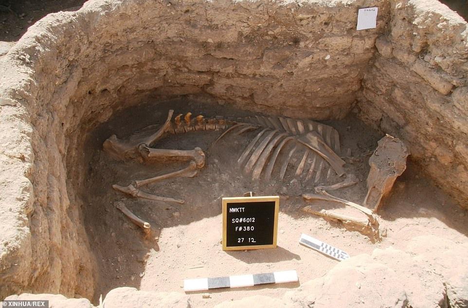 Ai Cập phát hiện 'thành phố vàng thất lạc' 3.000 năm tuổi