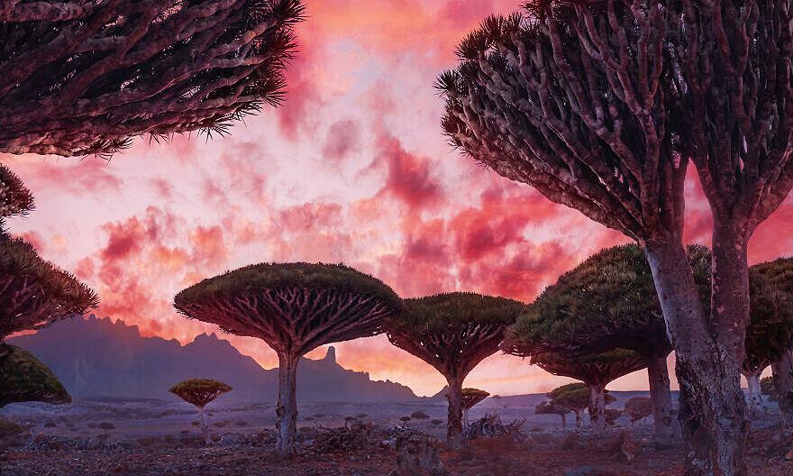 Hòn đảo của loài cây huyết rồng