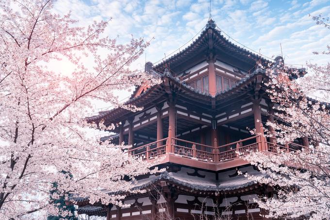 Ngôi chùa hoa đào nở rực rỡ trong phim 'Châu Sinh như cố'