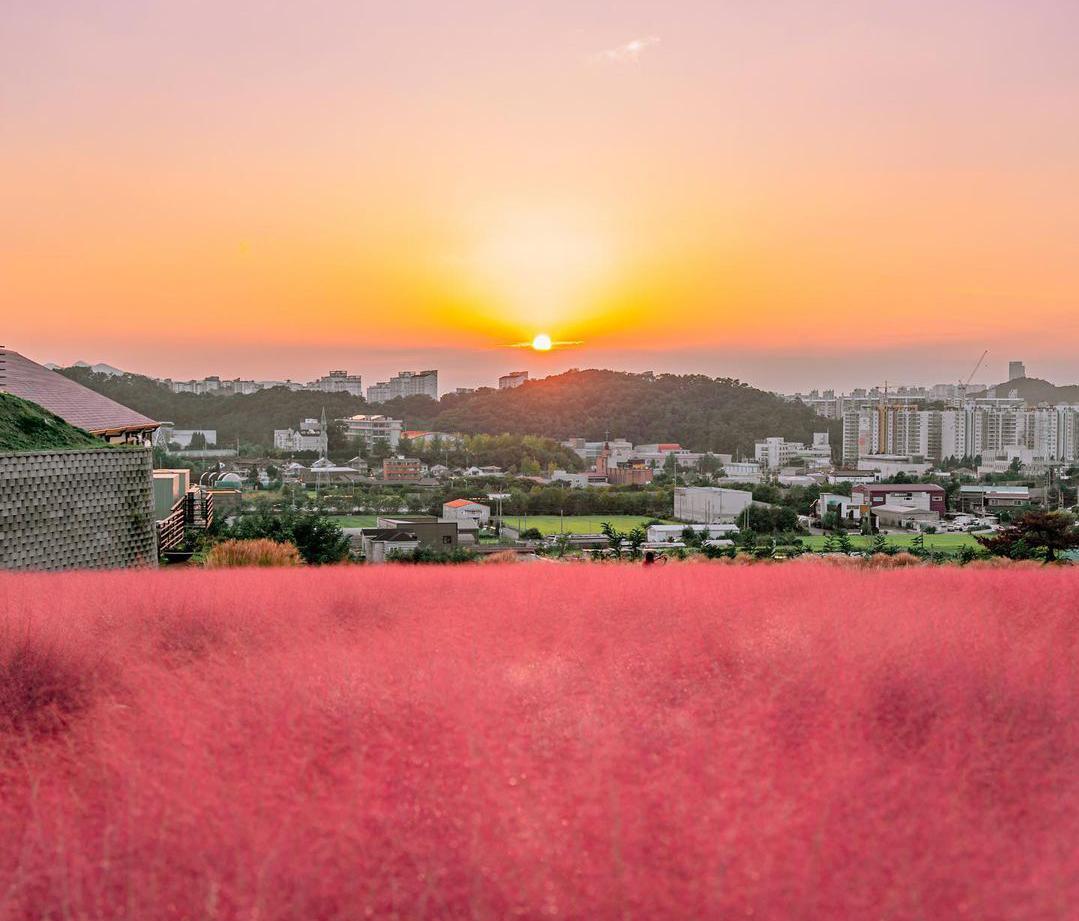 Mùa thu hồng ở Cheonan