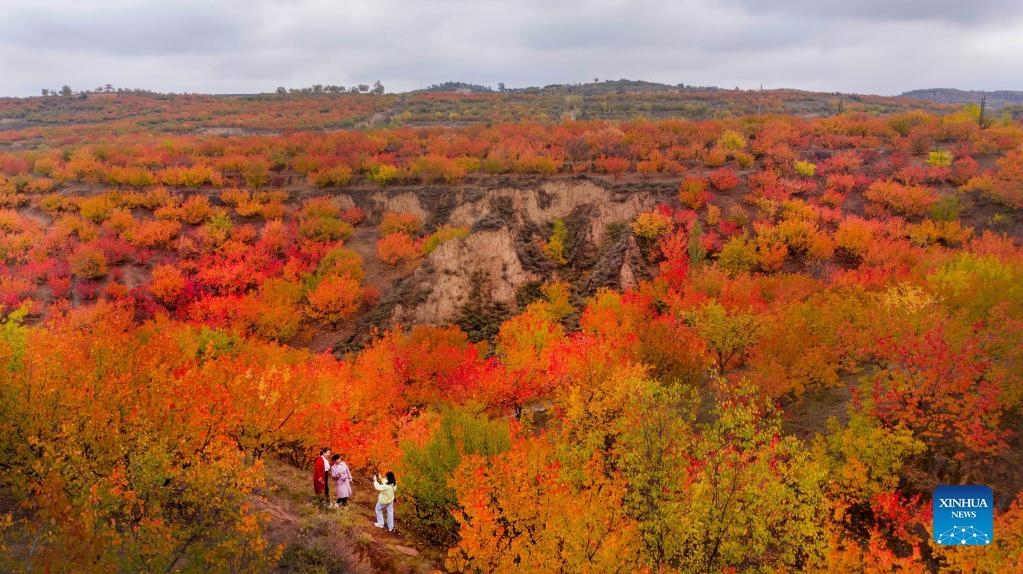 Rừng lá mùa thu đẹp 'nghẹt thở' ở Trung Quốc
